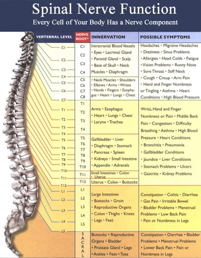 American Chiropractic Center   Hannover